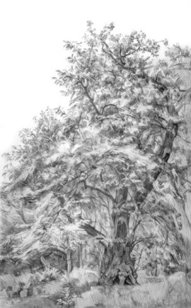 Hampstead, Sweet Chestnut Tree SOLD
