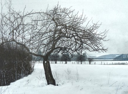 The Old Crab Apple in the Far Field SOLD