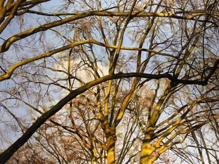 Trees at St. Luke's, London