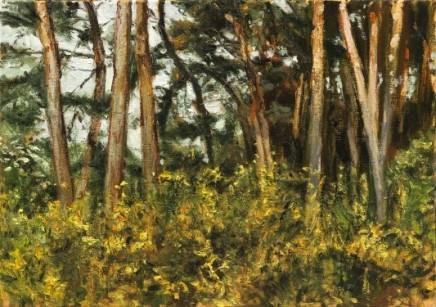Rosmalen Wood
