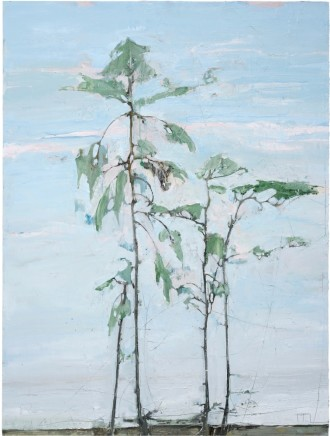 River Pine