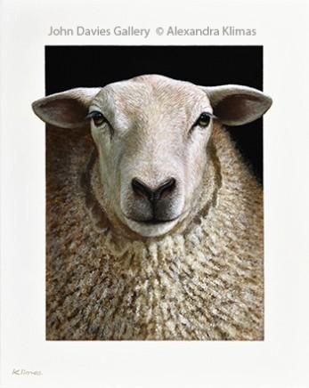 Lana the Sheep