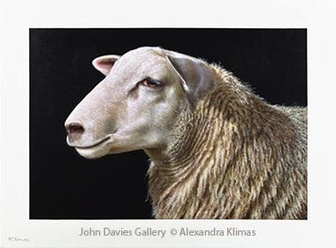 Lotte I the Sheep