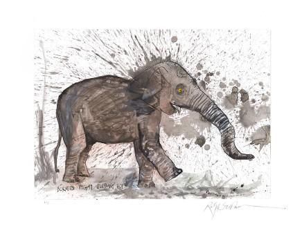 Ralph Steadman Borneo Pygmy Elephant £635 (framed)