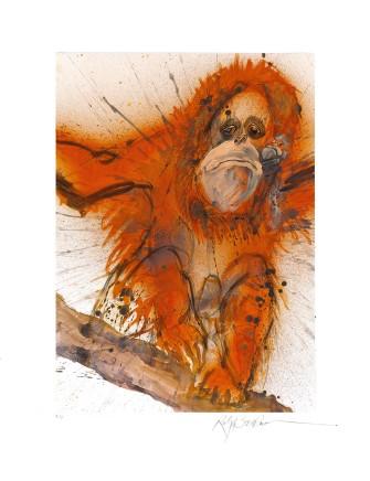 Ralph Steadman Borean/Sumtran Orangutan £635 (framed)