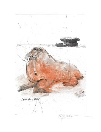 Ralph Steadman Walrus £635 (framed)