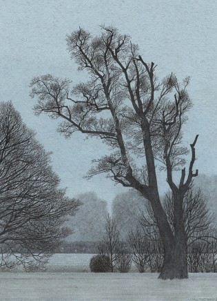 Simon Dorrell, An Alder on the Riverbank, Hughes' Field