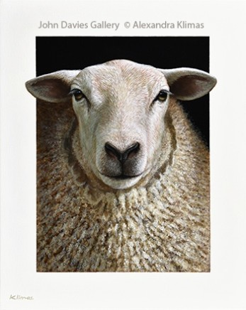 Alexandra Klimas, Lana the Sheep