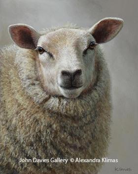 Alexandra Klimas, Betsy the Sheep
