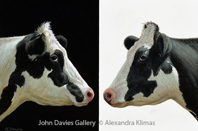 Alexandra Klimas, Lola & Lily the Cows