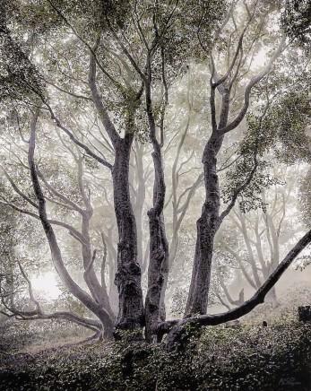 Mark S Payne, Enchanted Forest