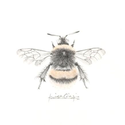 LOUISA CRISPIN - BEES & BOTANICALS