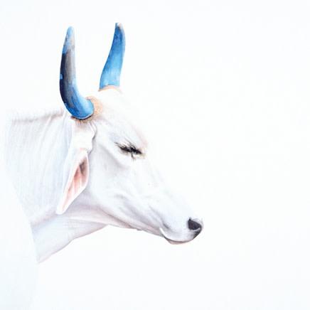 Peter Haslam - Fox : White