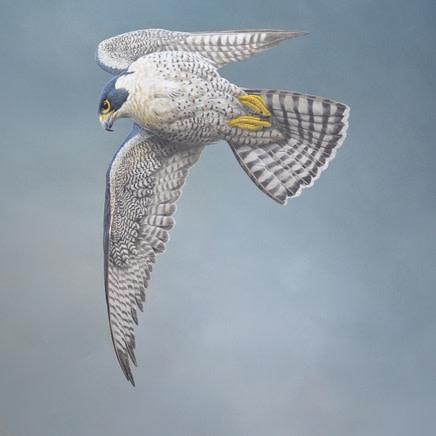 Tim Hayward : Birds of Prey