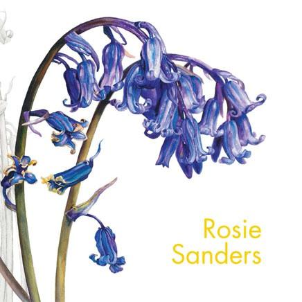 Rosie Sanders : Dandelions and other flowers Paintings of wild flowers