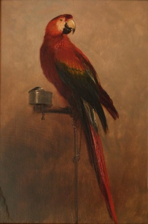 George Cole, Study of a Parrot