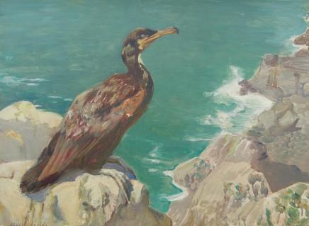 Charles Walter Simpson, Green Cormorant