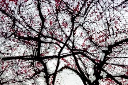 Leo K. K. Wong, Spring Condensed, 2006