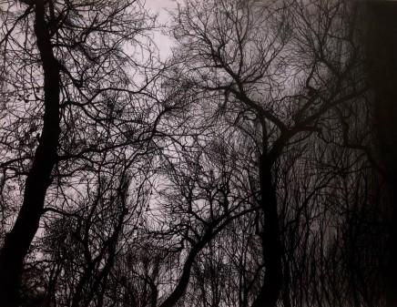 "Tomas Antalek, ""Trees"", 2019"