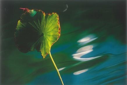 Leo K. K. Wong, Quiet Observation, 2001