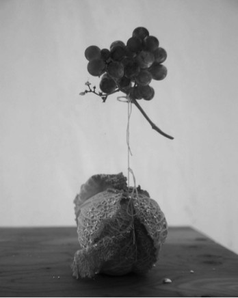 Alejandro Almanza Pereda Napa Grapes, 2015 Archival pigment print on cotton paper 80 x 64 x 2.5 cm Edition 1 of 5 plus 2 AP (AAP 003)