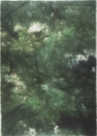 树丛 Bushes, 2015-2016