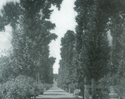 Not known, The palace gardens of Mass'oud Mirza Zell-e-Soltan, Ispfahan, Late 19th Century