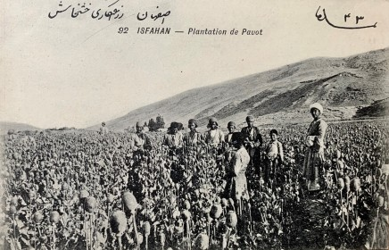 Antoin Sevruguin, An opium poppy field in Isfahan, Early 20th Century