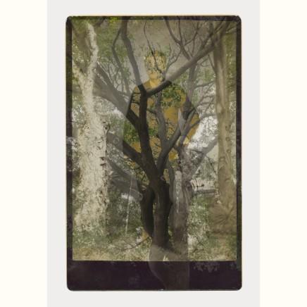 Sara Angelucci | Arboretum