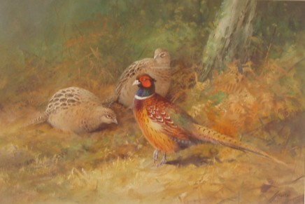 Neil Cox - SEPTEMBER MEADOW - ENGLISH PARTRIDGES
