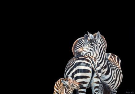 Rachael Wild - ZEBRA TRIO
