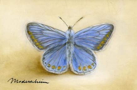 Tanja Moderscheim, Common Blue