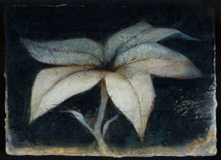 Peter White, Flower 9