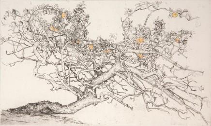 Ian Westacott, Apple Tree, Sweden