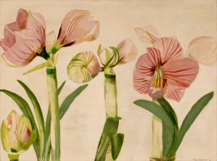 Mary Newcomb, Studies of an Amaryllis Flowering, 1987