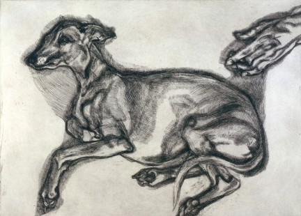 LUCIAN FREUD 1922-2011, Pluto Aged Twelve, 2000, etching on Somerset textured white paper, 57 x 76 cm, edition of 46 plus 12 artist's proofs; publisher Matthew Marks, New York; printer Marc Balakjian at Studio Prints, London.