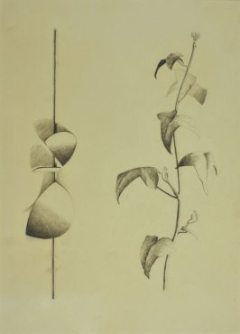 <span class=&#34;artist&#34;><strong>Robert Adams</strong></span>, <span class=&#34;title&#34;><em>Drawing of curved forms with a tendril of ivy, opus 113</em>, 1960</span>
