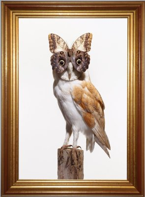 Butterfly Owl - White