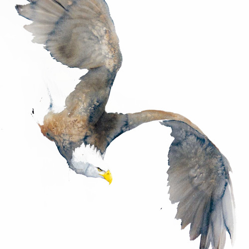 Karl Martens - Bald Eagle (Unframed) (Hungerford)