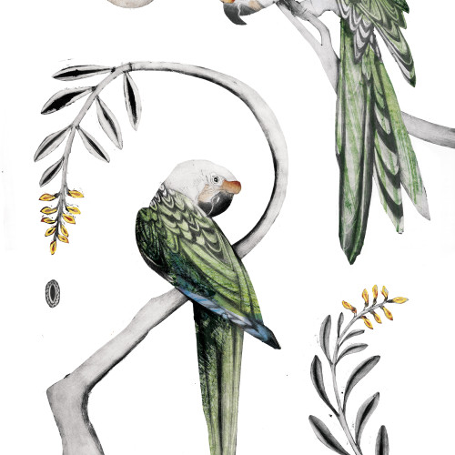 Beatrice Forshall - Great Green Macaws II