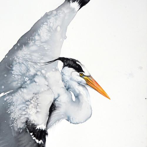 Karl Martens - Grey Heron Flying (Unframed)