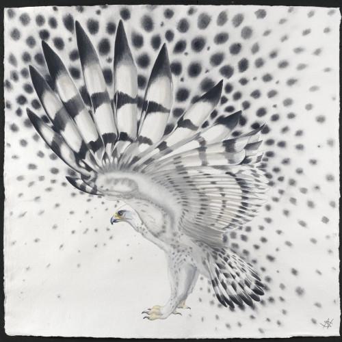 Nikki Stevens - Molecule Bird (Hungerford Gallery), 2015