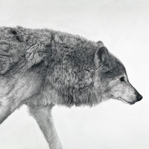 David Hunt - Canis Lupus I (London Gallery)
