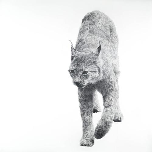 David Hunt - Lynx I (Hungerford Gallery)