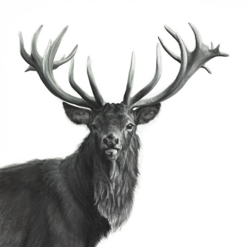 Lucy Boydell - Watchful Stag