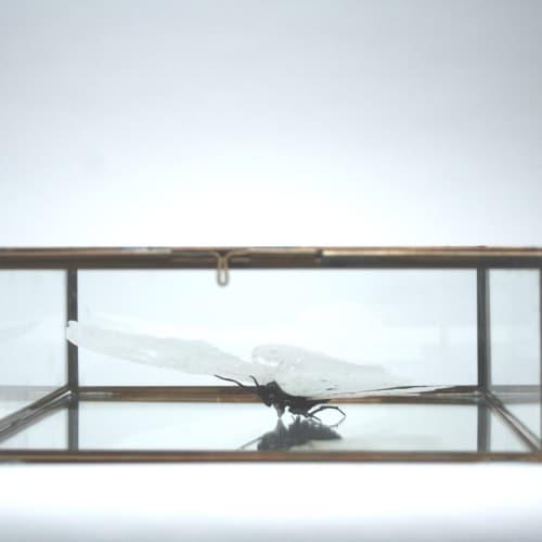 Mary O'Malley  North American Atlas Moth, 2017  Magnetic Clay, Patte De Verre victorian vitrine  6.3 x 20.3 x 20.3 cm  2 1/2 x 8 x 8 in.