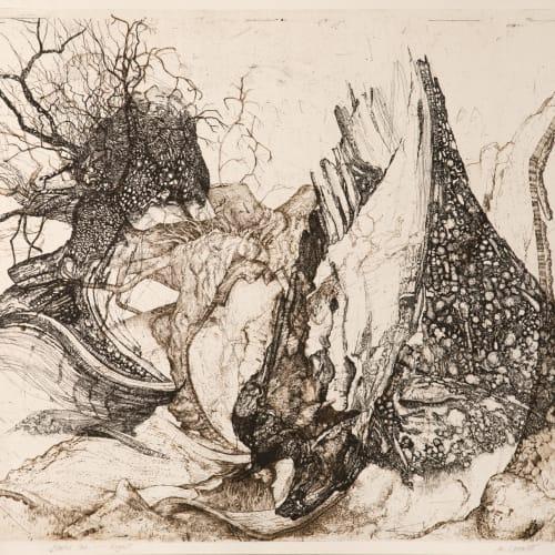Ian Westacott  Blasted Rogart Oak, 2006/20  etching  60cm x 70cm