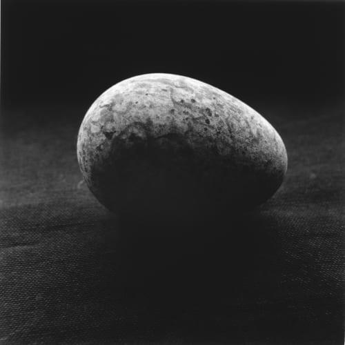 克里斯托弗.戴樂, 《海鳩蛋,Svalbarð Þistilfjörður 》 Guillemot Egg,Svalbarð Þistilfjörður , 2014
