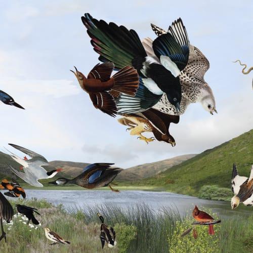 Diane Rosenblum, John James Audubon Painting 1990 - 2008