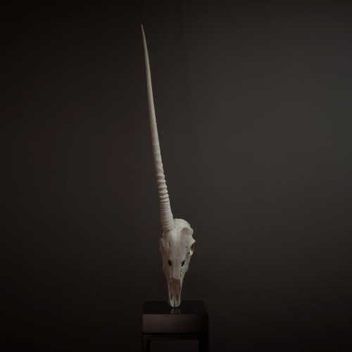 Jenna Burchell, Gemsbok Skull - Songsmith (Fragile Homes), 2019